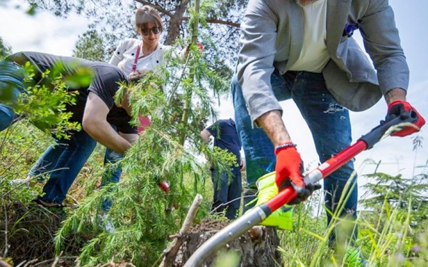 გამწვანების მასშტაბური ღონისძიება კუს ტბის მიმდებარე ფერდობზე