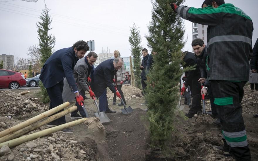 ვარკეთილში 1300 ძირი მარადმწვანე ხე დაირგო